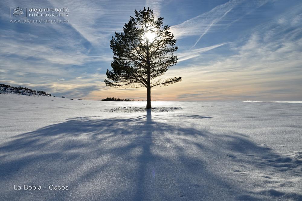 Bobia-nieve-07-W