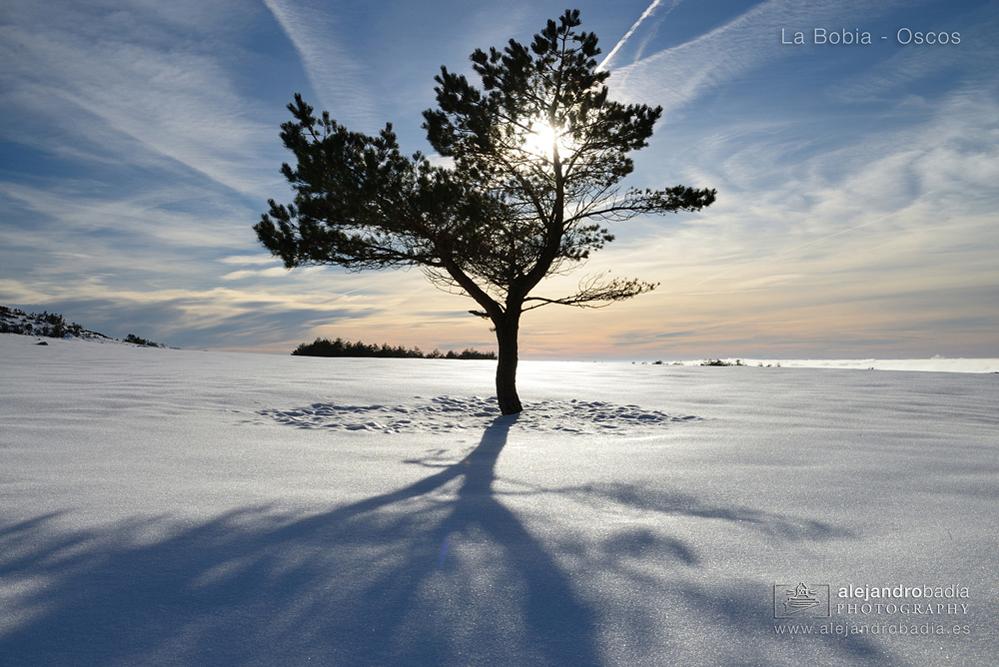 Bobia-nieve-15-w
