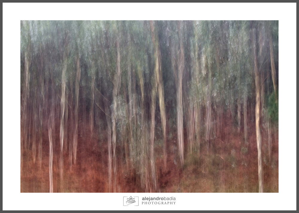 Bosque-ART-01