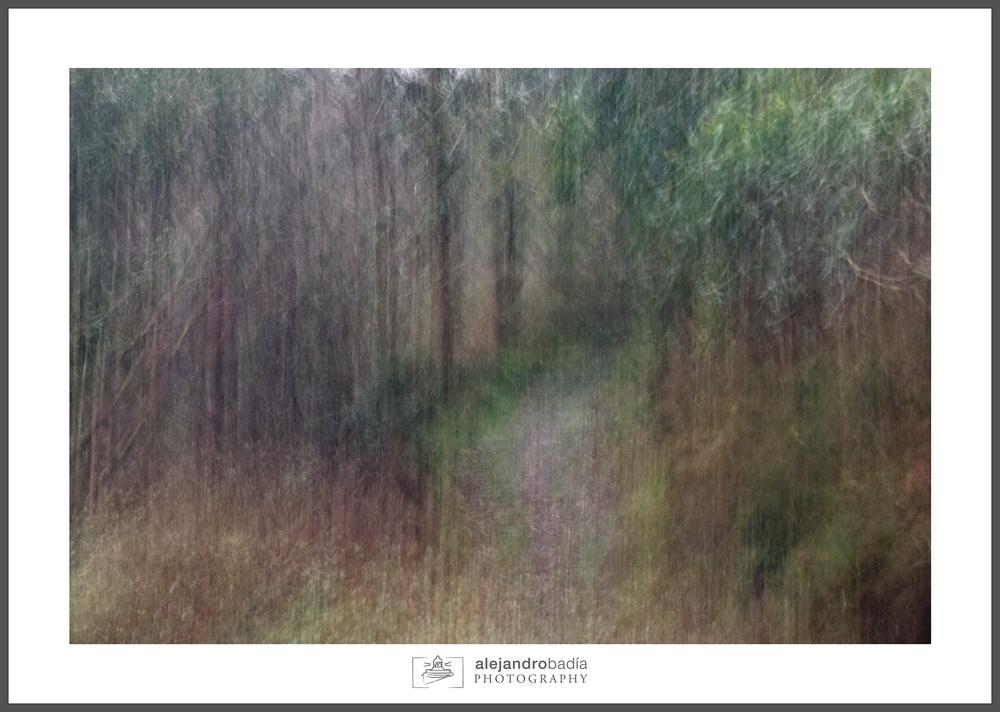 Bosque-ART-02