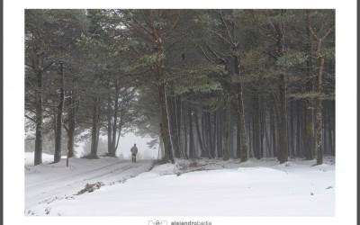 Penouta invernal