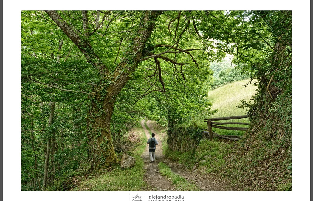 Ruta por el bosque de Villardecendias- Ibias