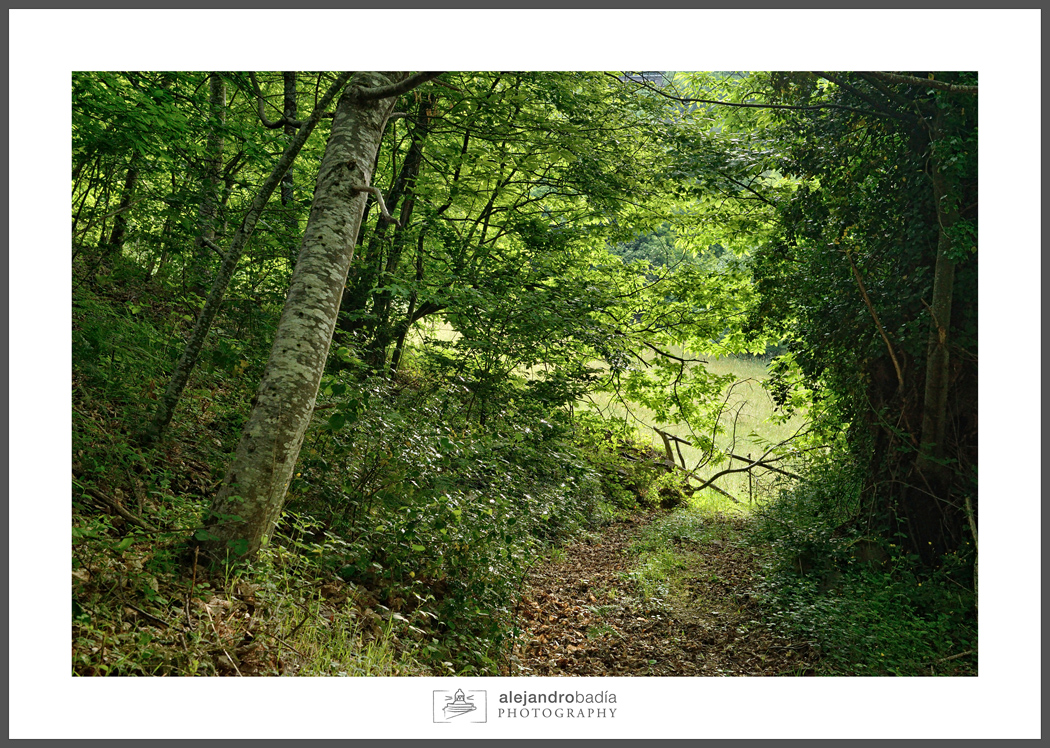 Bosque-Verde-ART-02