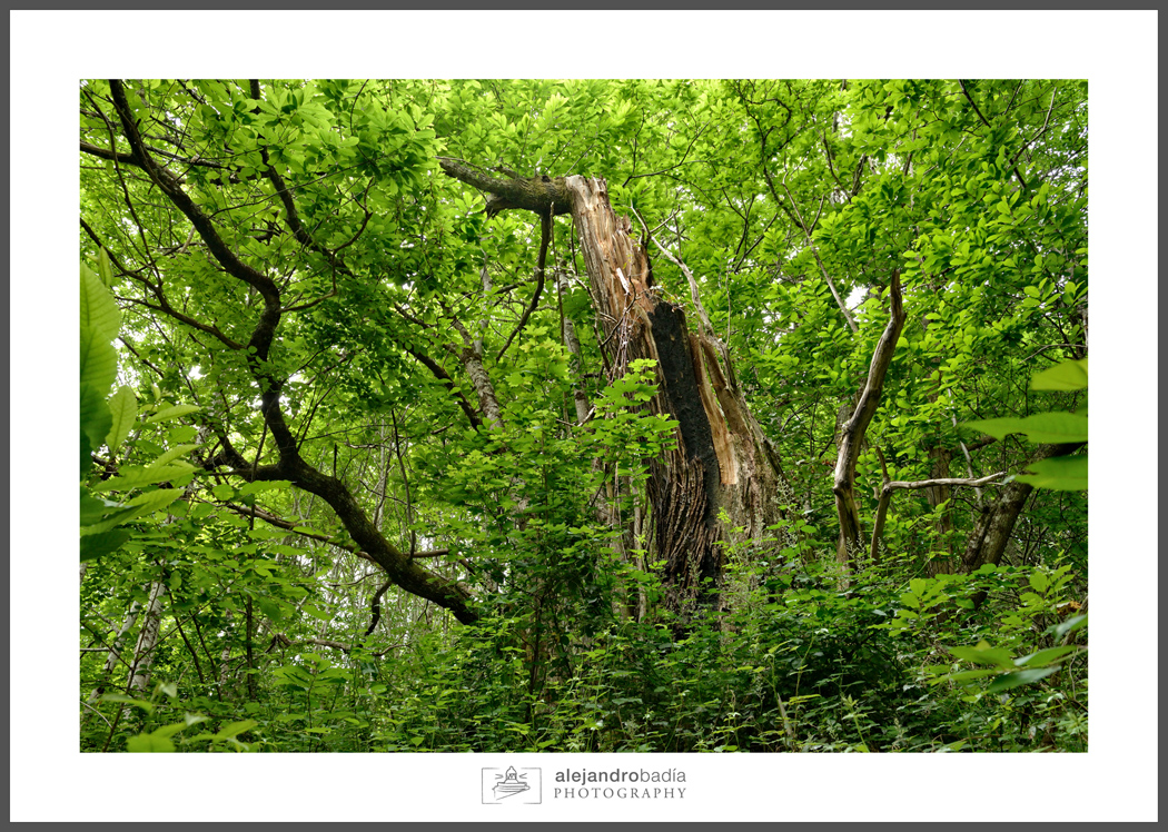 Bosque-Verde-ART-07
