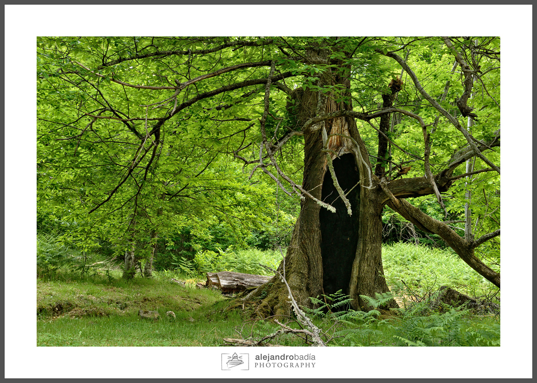 Bosque-Verde-ART-10