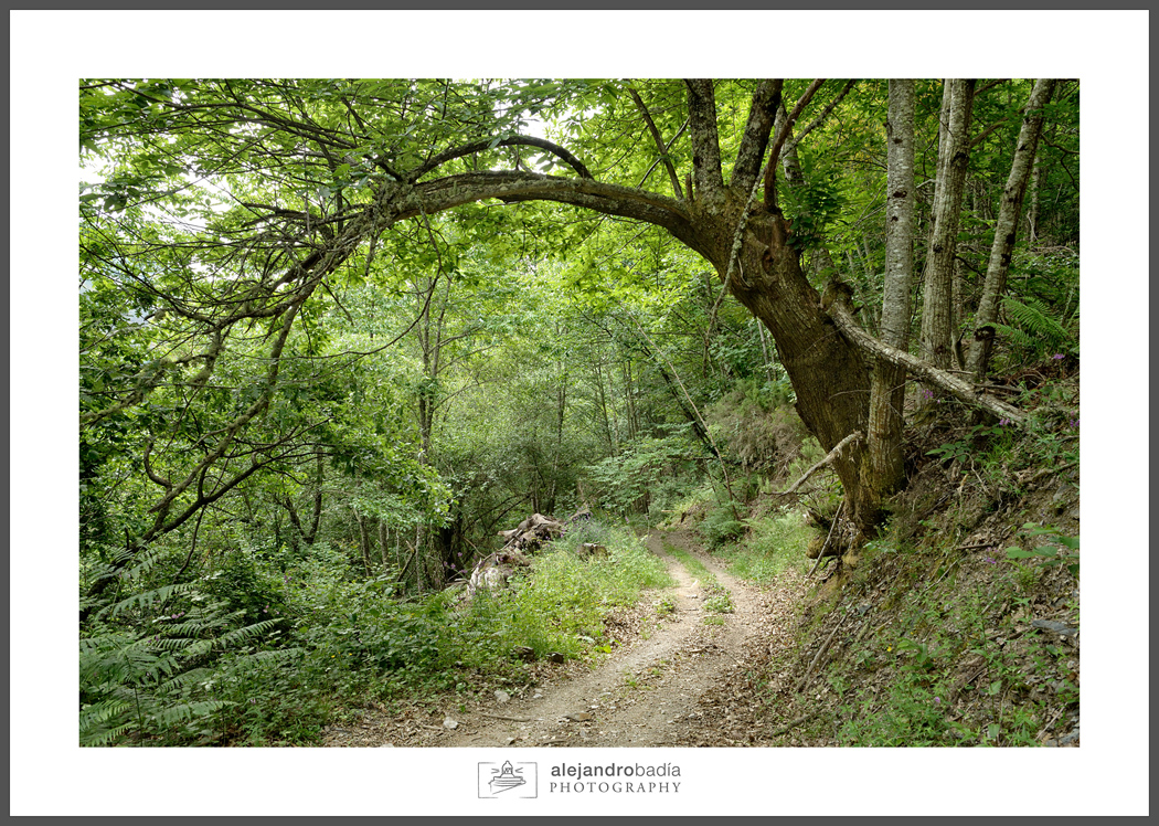 Bosque-Verde-ART09