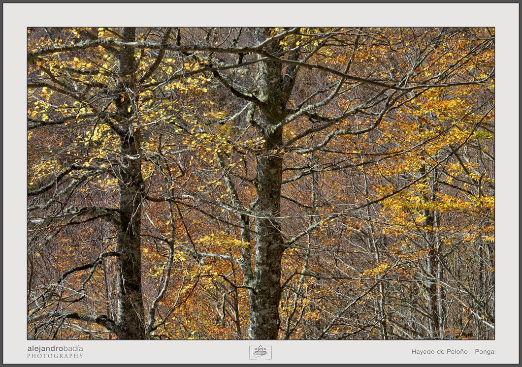 Peloño-Hayedo-06-w