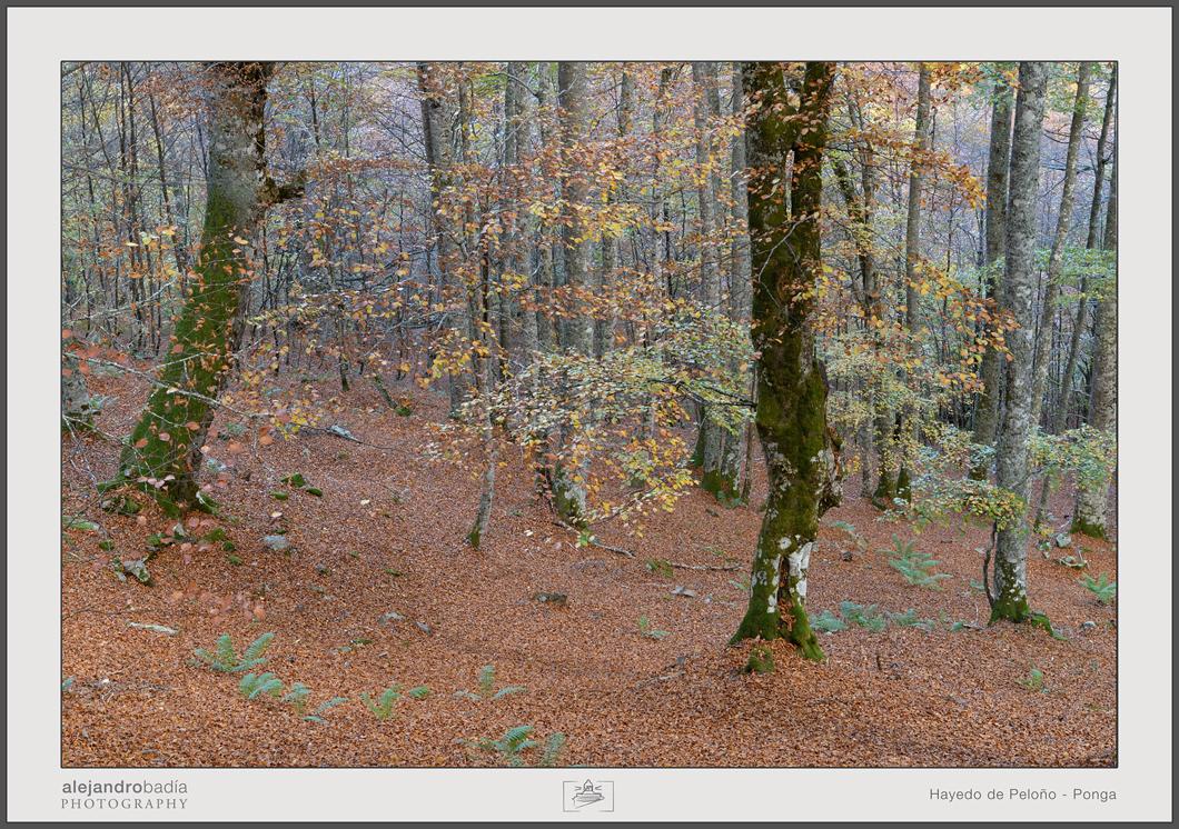 Peloño-Hayedo-11-w