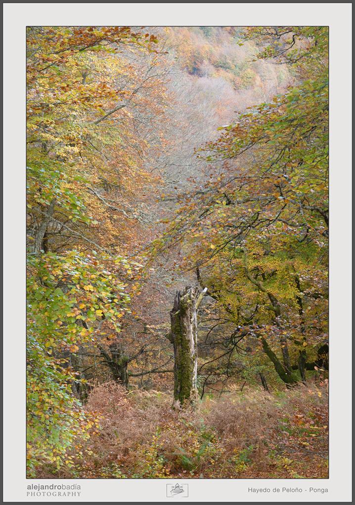 Peloño-Hayedo-12-w