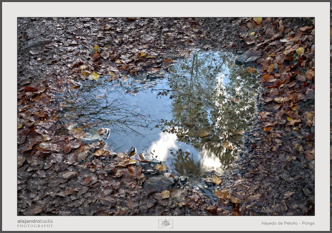 Peloño-Hayedo-17-w