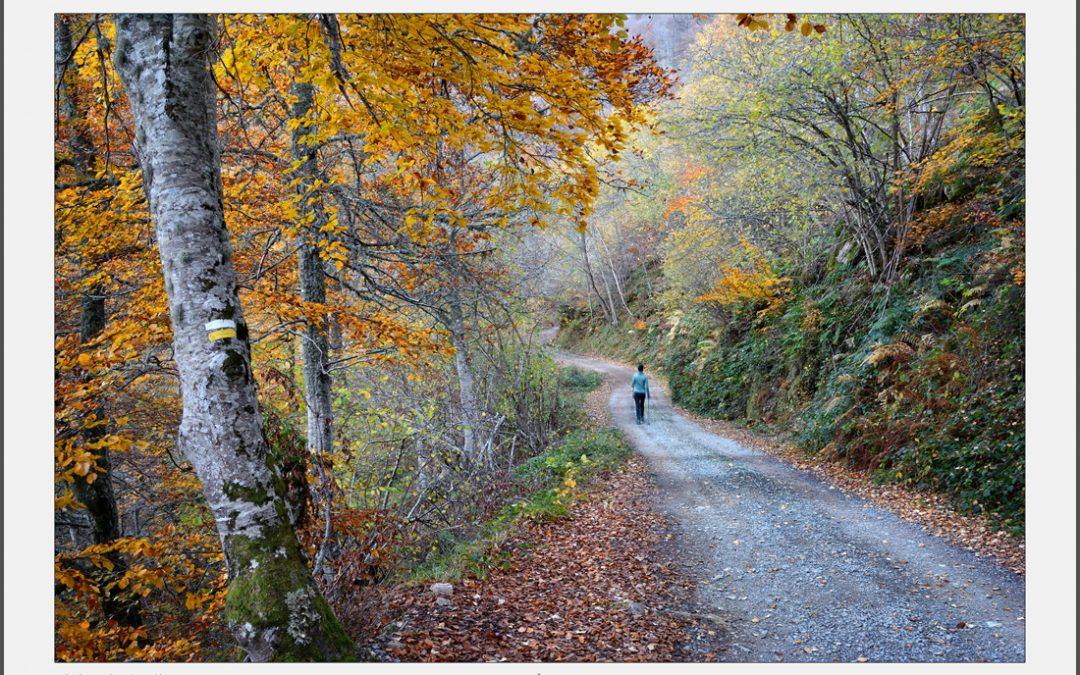 Ruta de Brañagallones – Caso