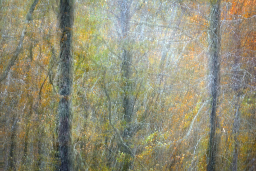Pintando bosques