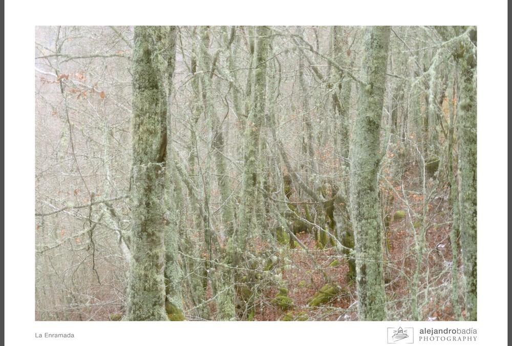 Otras Visiones – Bosque de La Enramada – Somiedo