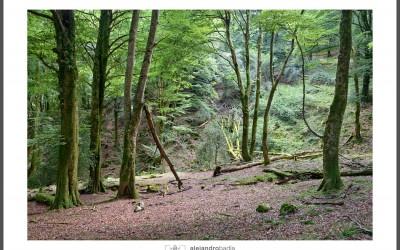 Hayedo de la Biescona – Mirador del Fito – Lago Ercina