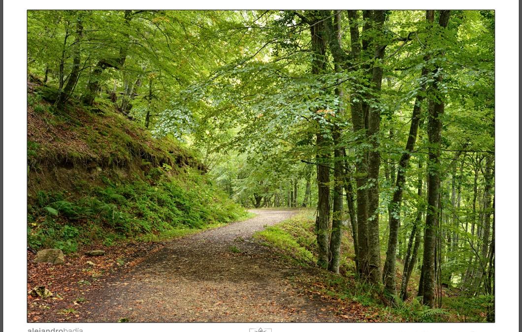 Hayedo de Montegrande y Cascada del Xiblu