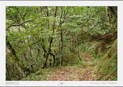 Ruta Teixo-Teixois-06-w