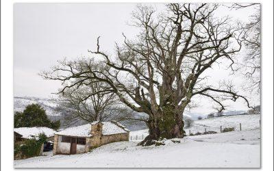 Nieve en Primavera – Tineo