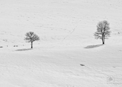 Bobia-nieve-23
