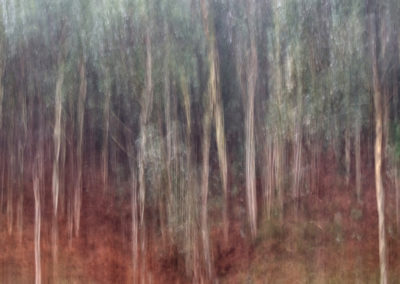 Bosque-1-ART-01