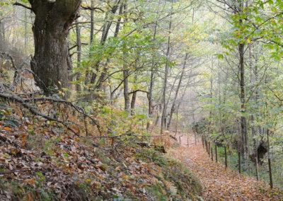 Bosque Moal-01