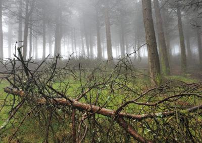 Bosque en Boal-01