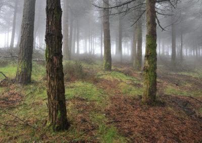 Bosque en Boal-03