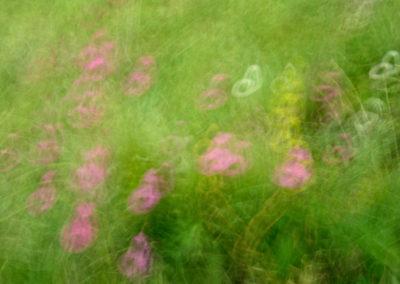 Colores primaverales