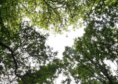 El corazon del bosque