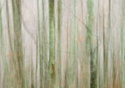 Enramada-ART-04