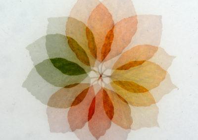 Flor de Otoño-02-