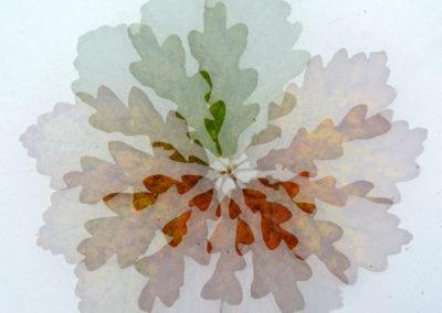 Flor de Otoño 03