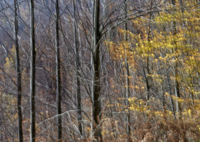 Hayedo-Peloño-34