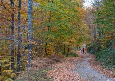 Hayedo-Peloño-62