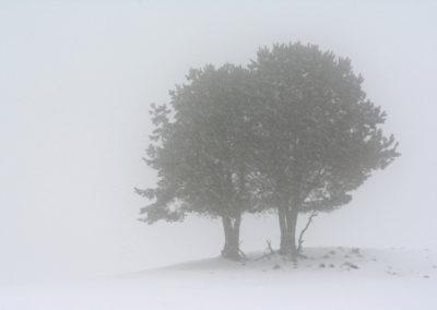 La Bobia-Febrero-2018-35