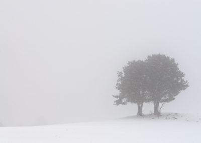 La Bobia-Febrero-2018-49