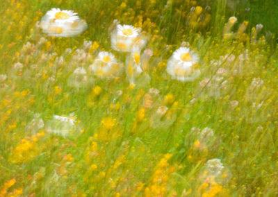 Olor a primavera-4