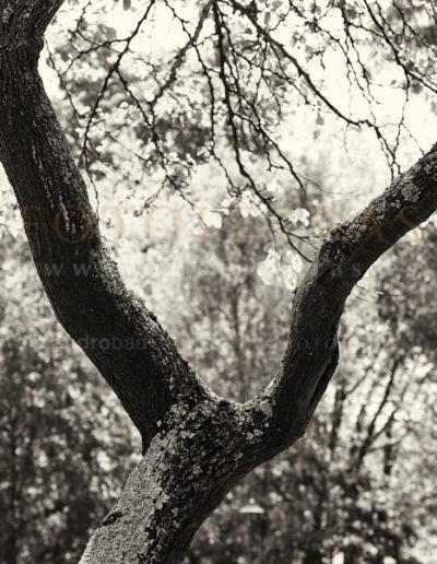 Fotoletra-Y-web_08
