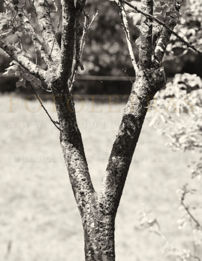 Fotoletra-Y-web_09