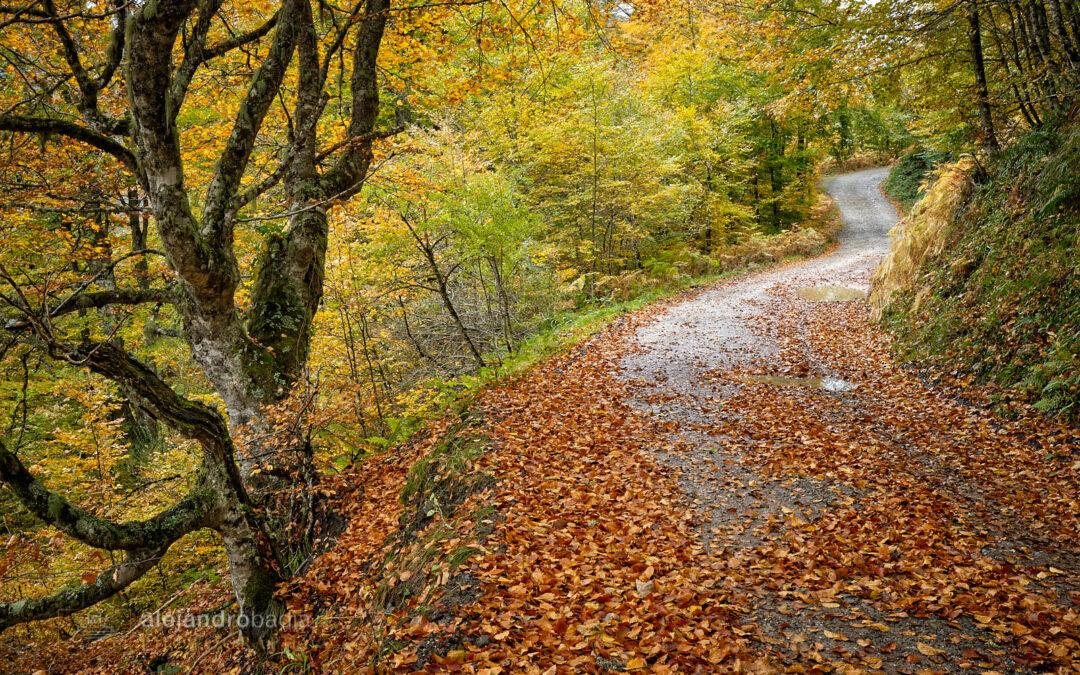 Otoño 2020 en los bosques Asturianos